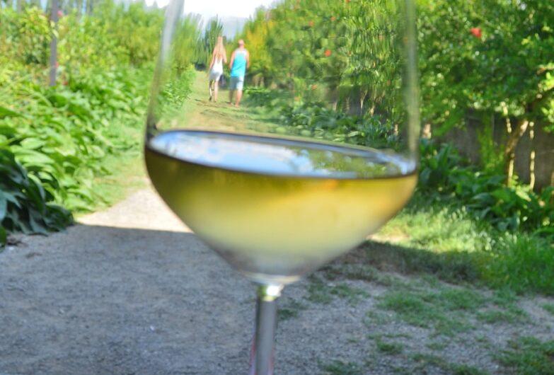 uka farm, geruite tafelkleed, glas witte wijn, mensen in de verte