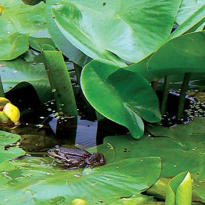 flora en fauna aan het meer-van-Shkodra-400